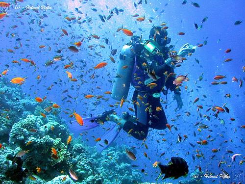 Scuba Diving Caraibe