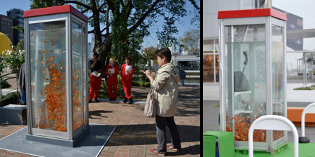 acvarii - cabine telefonice